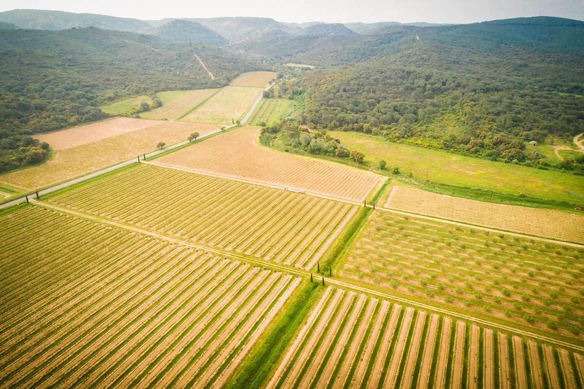 Les Vins de Fontfroide - Vignoble vu du ciel